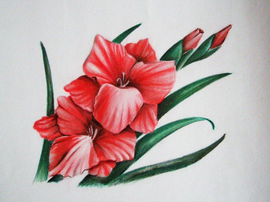 ленивый фото цветы срисовать примеров применения скриншотов