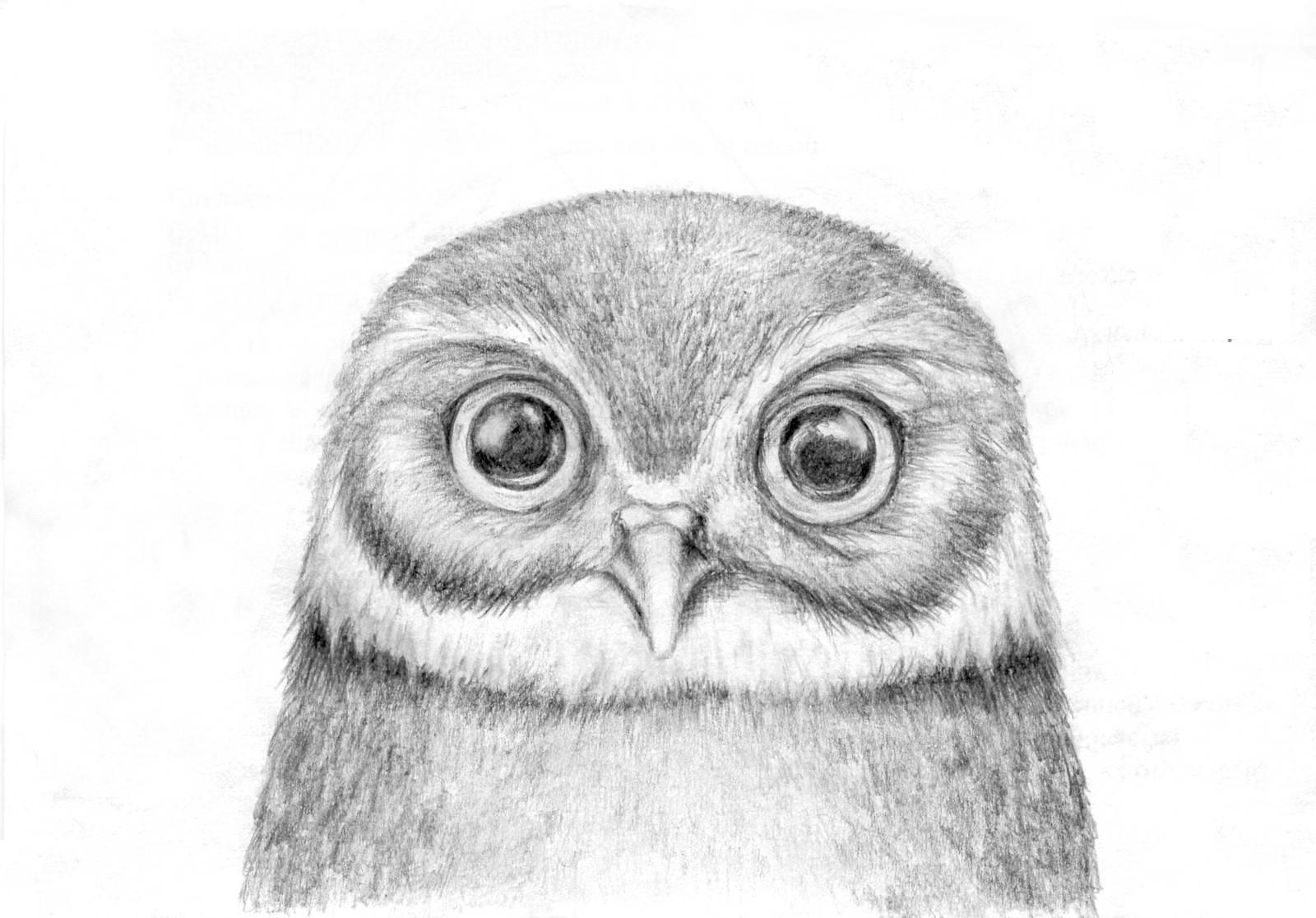 милые картинки рисовать простым карандашом очень