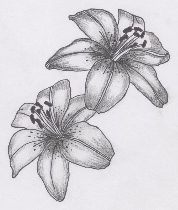 Картинки фото, лилии картинки красивые нарисованные