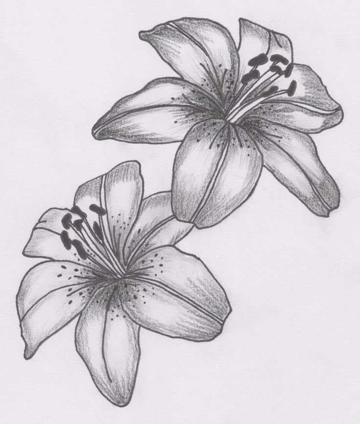 Картинки красивых цветов для срисовки, картинки лет картинка