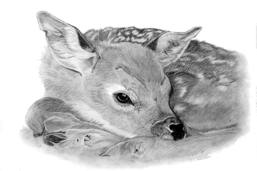 Картинки для срисовывания карандашом животные