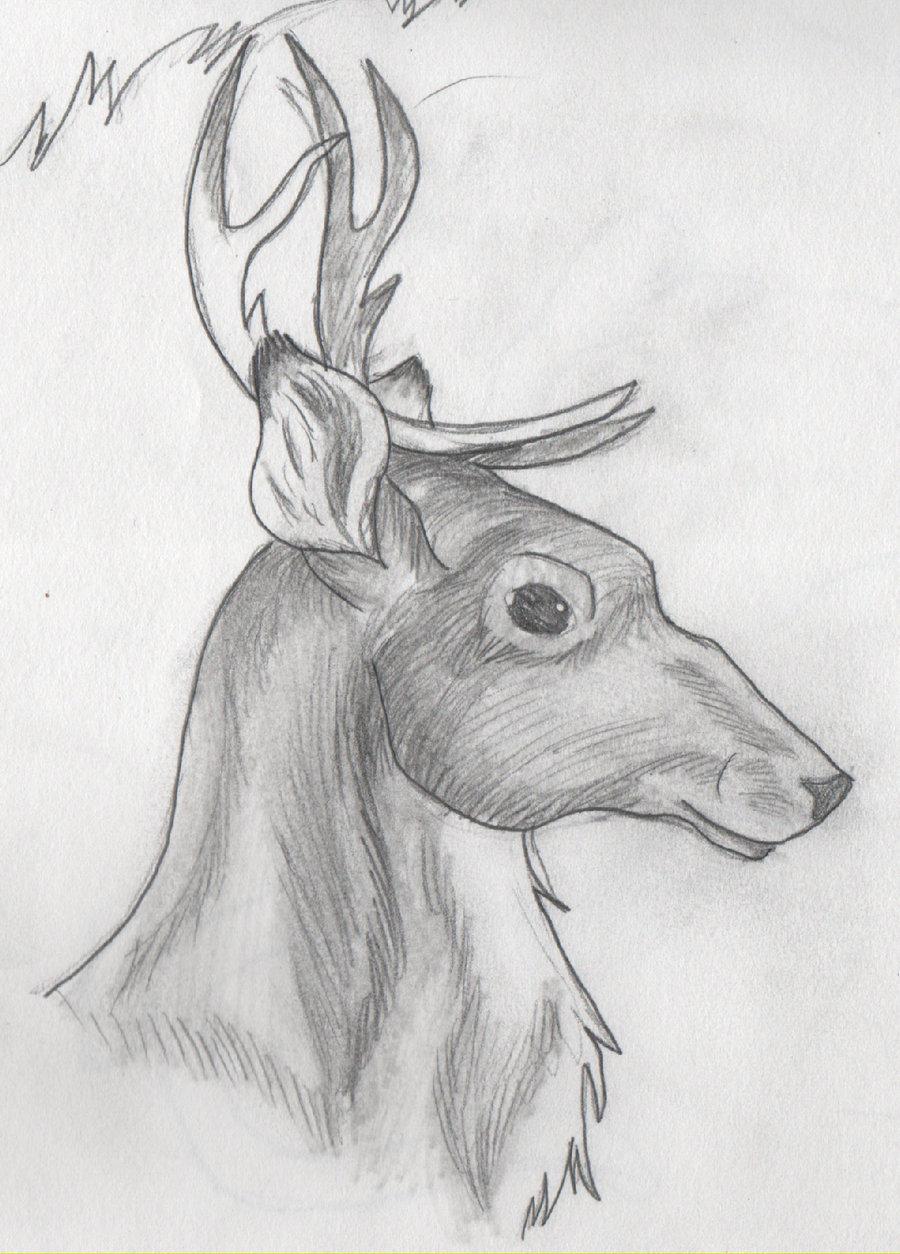 Картинки животных для срисовки легко