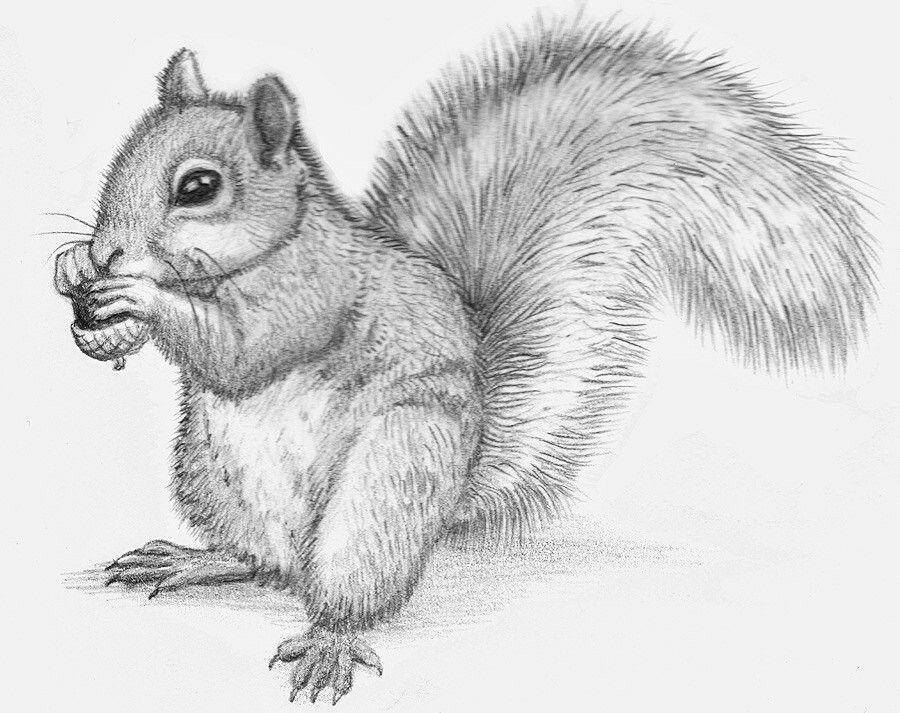 Картинки с животными нарисованные карандашом для детей, день мужчин открытки