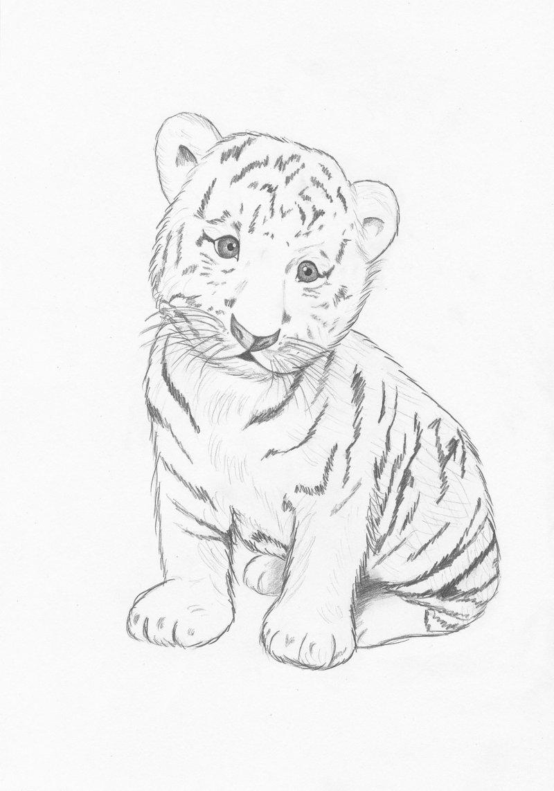 картинки тигров и тигрят карандашом модели частичной