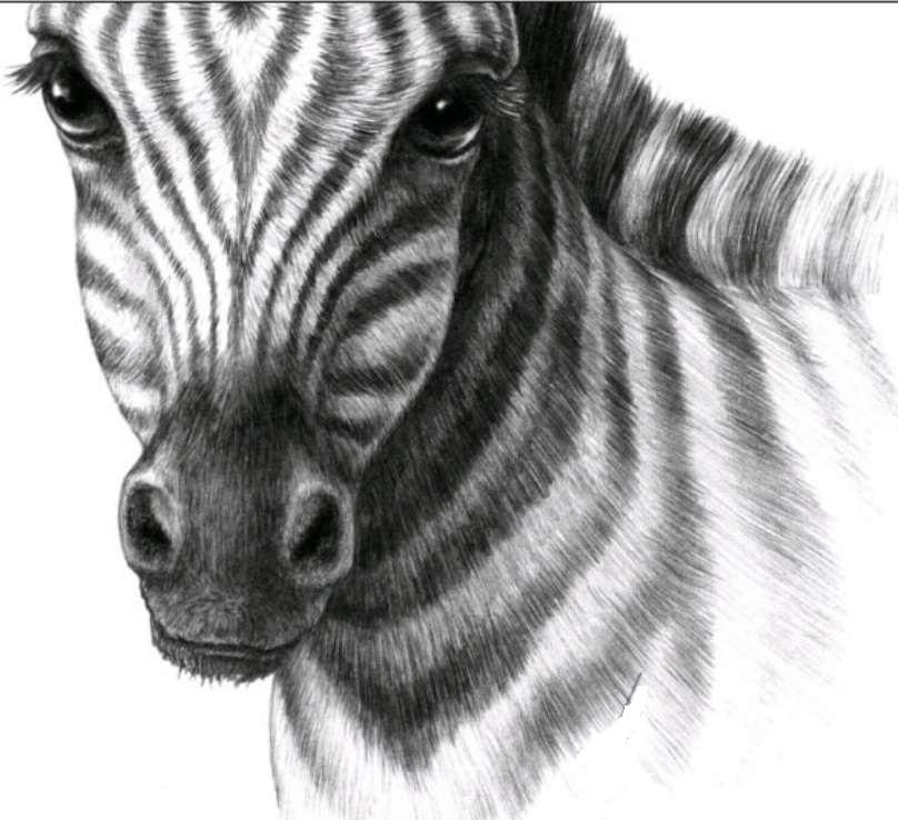 Картинки рисунки животные, днем рождения для