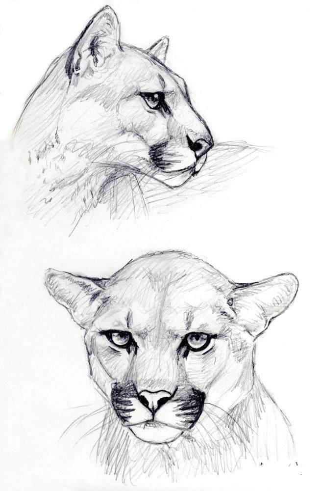 Что мне нарисовать красивое животное картинки
