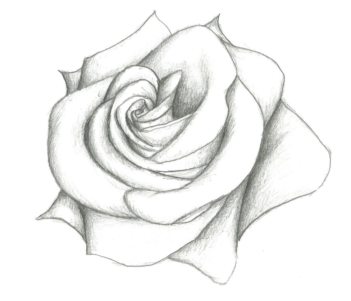 Картинки розы для срисовки