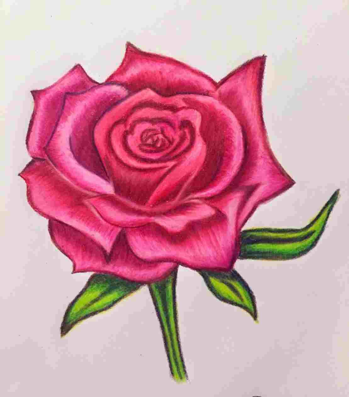 Покажите новые розы фото