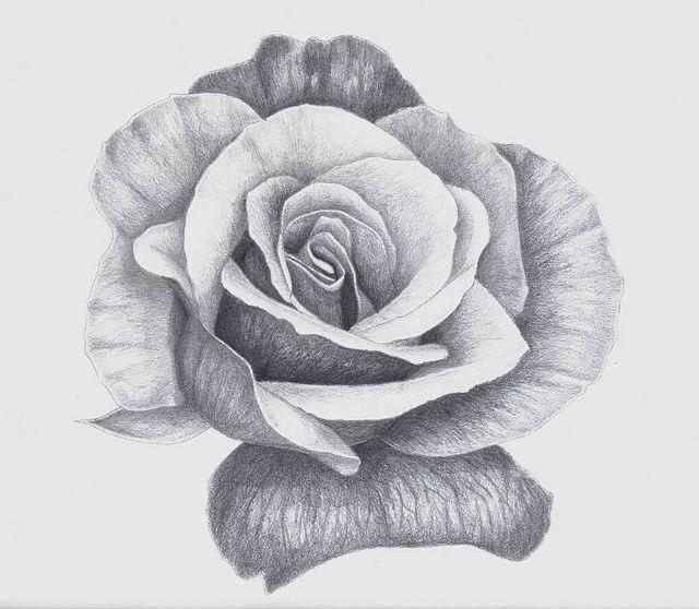 Надежде, картинка розы для срисовки