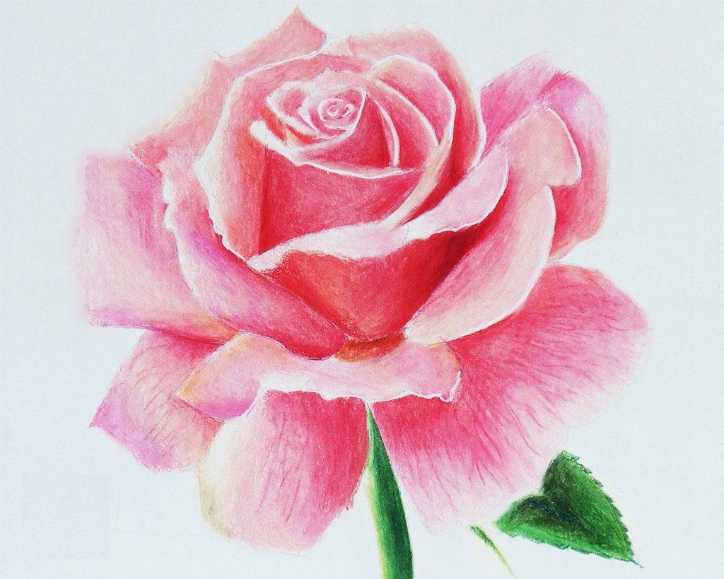 Рисунок красивые цветы