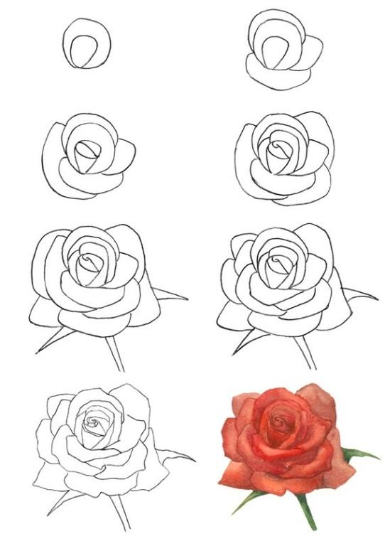 Добрым, как нарисовать маленькую розу для открытки