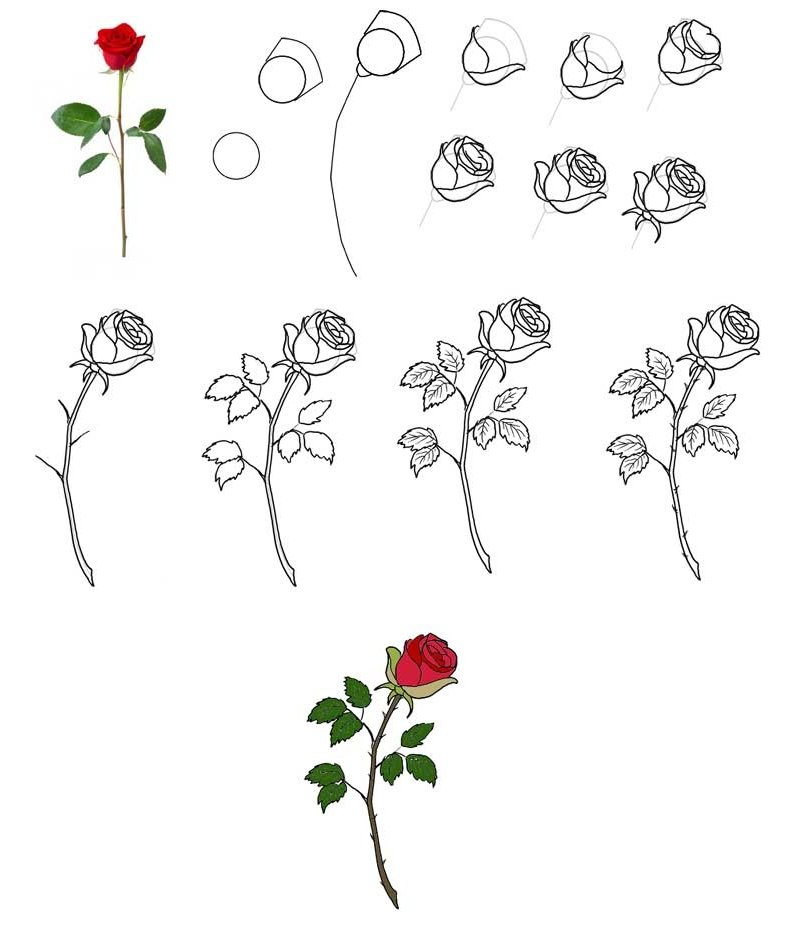 сеткой розы фото цветов как рисовать время сна таком