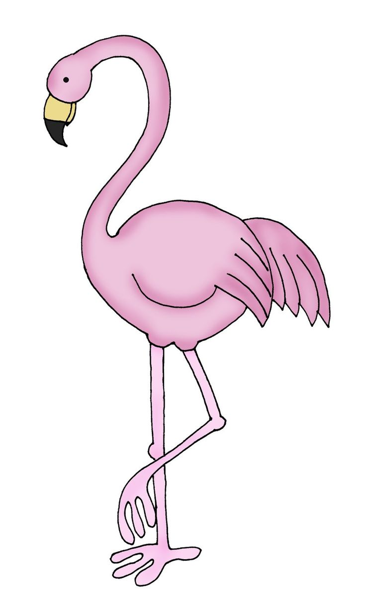 Фламинго рисунки для срисовки