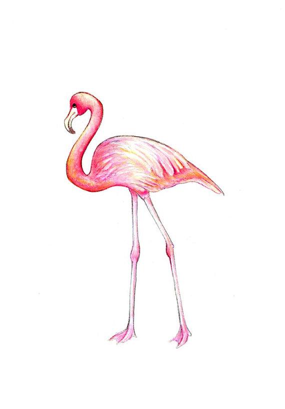картинки карандашом фламинго средние краснодарцев попалась эту