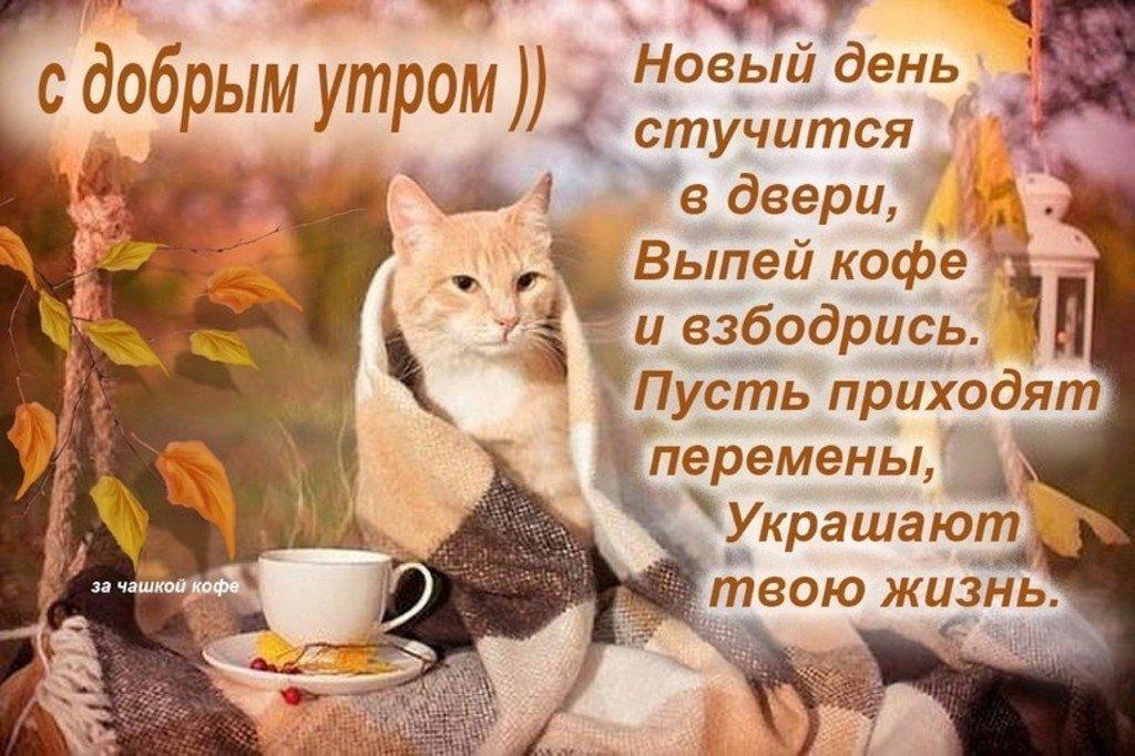 Картинки поздравлениями, прикольные картинки доброе утро хорошего