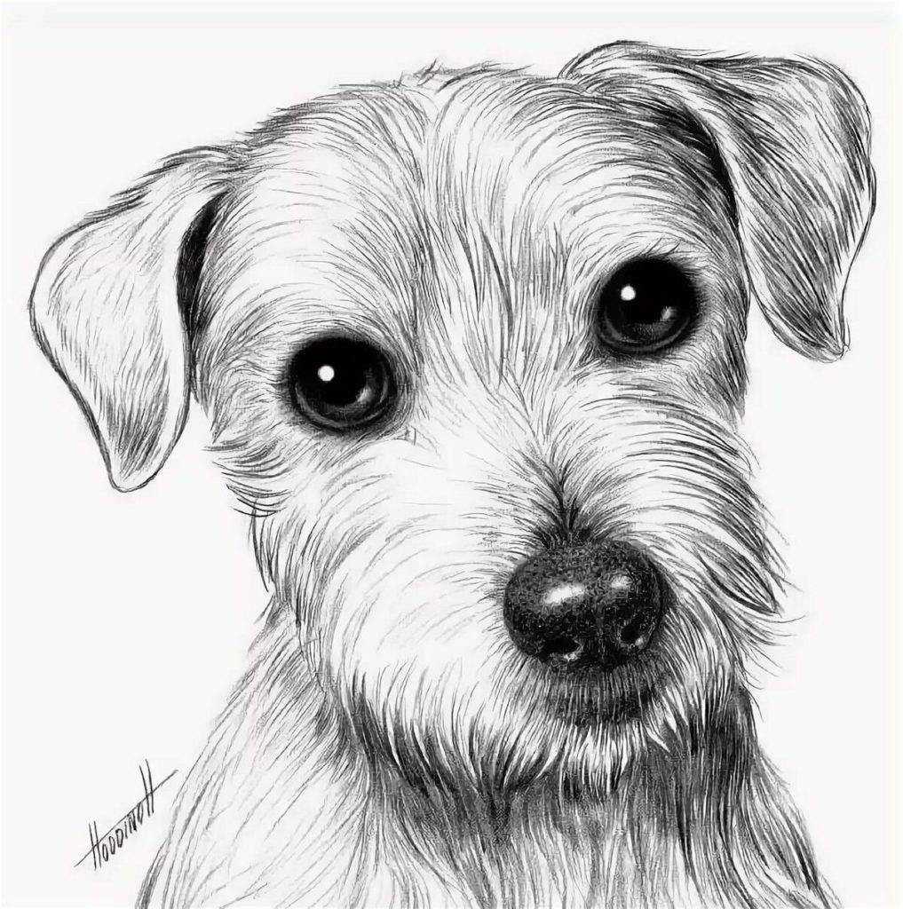 Рисункии собак для срисовки